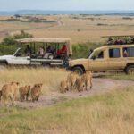 Prenotare un Safari online: ecco come fare